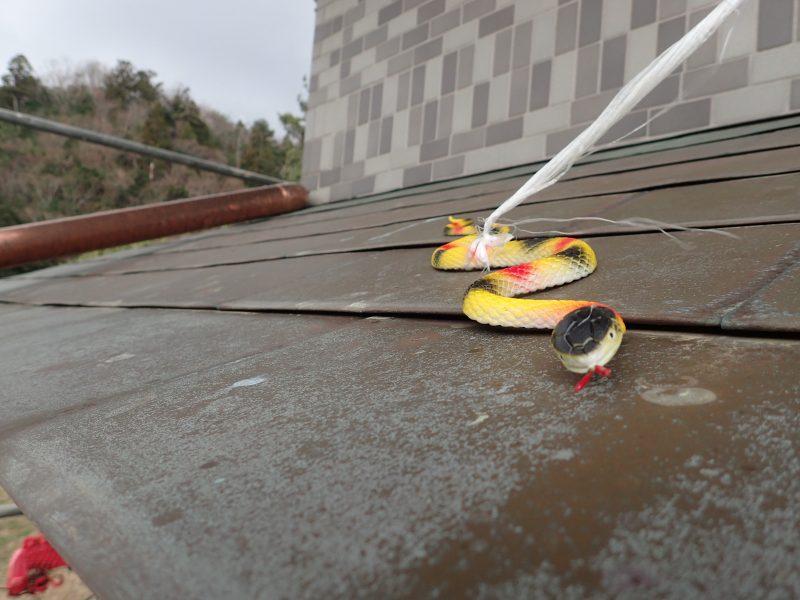 黄色いヘビ